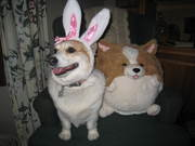Smile Bunny