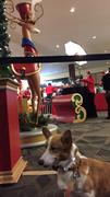 Photo uploaded on December 12, 2015