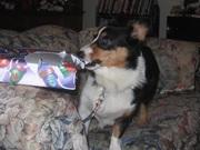 Teddy Opens A Present