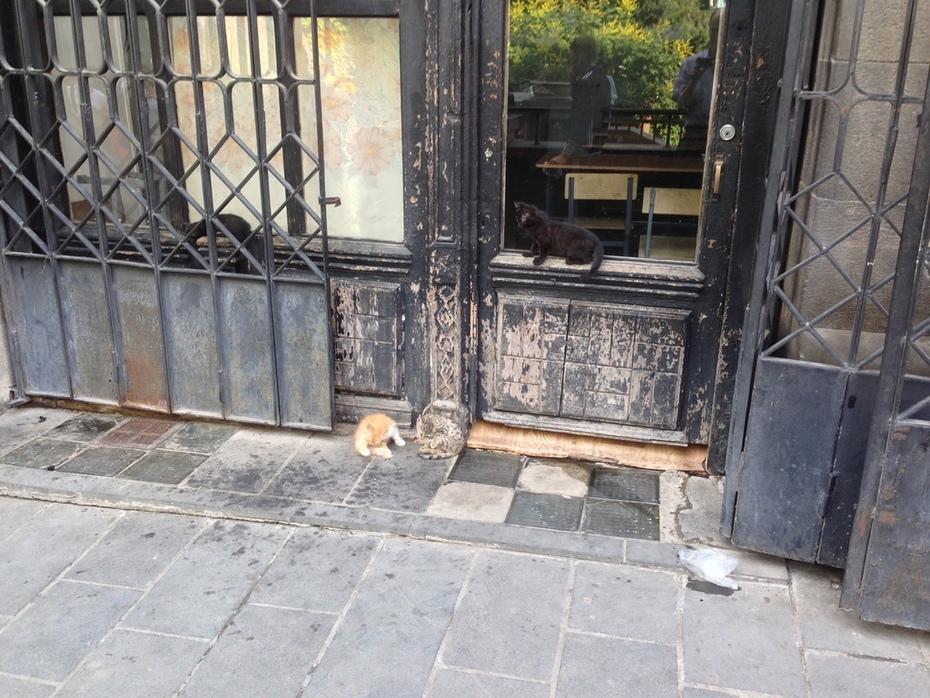 პეპელას ყველგანმავალი კნუტები