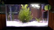 10 gallon planted tank