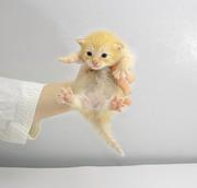 Open Access Kitten Cam Fest!