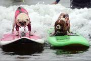 World Dog Surfing Championships