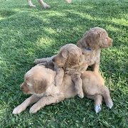 1st litter Hamilton and Kennedy