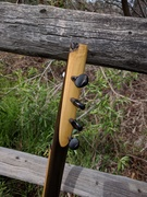 Gourd Banjo #15