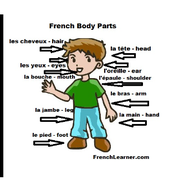 french body parts