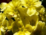 Marvelous_Colorful_Flowers_Hd_Wallpaper_34_42458