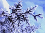 Snow-Fall-Wallpapers-290x217