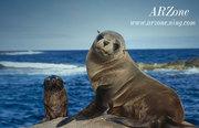 ARZone sea lions