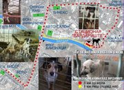 SAVE THE DOGS IN MACEDONIA FROM GENOCIDE