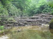 Log Jam at Lower river