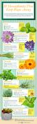 10-Houseplants-That-Keep-Bugs-Away