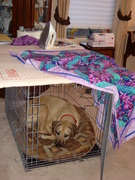 Kula in crate under quilting