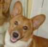 dingo 2 years old