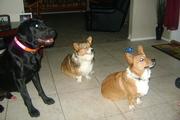 Duke with Mimi and Dingo