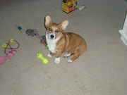 Lucy in the middle of all her toys