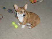 Lucy playing with toys