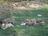 Poso Creek Corgis