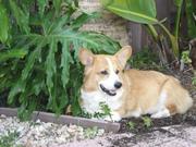 In Loving Memory of Roscoe 8-28-2008