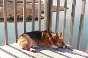 Snoozin' on the Sound