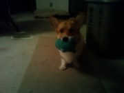 playin' with his smurfy
