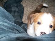 Rufus!