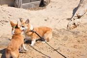 Moira & Maddie at the beach 2