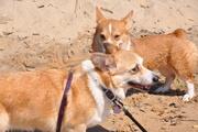 Moira & Maddie at the beach