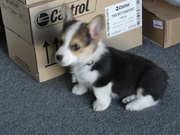The shop puppy