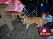 Dewey, the party animal!