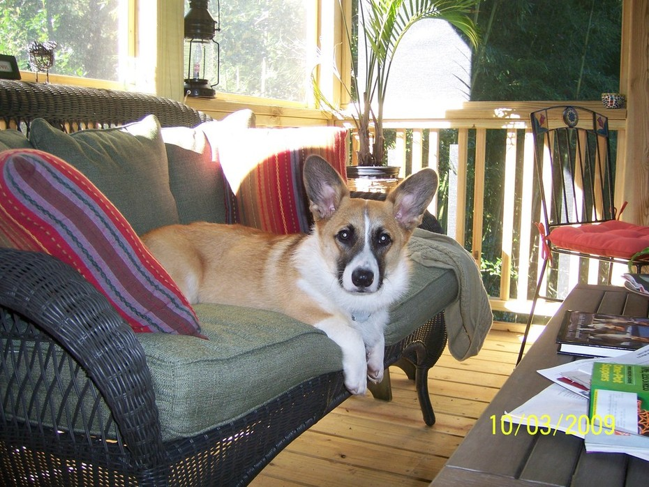 Dewey on our new screened porch
