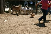 Marley Herding