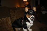 Belle Belle 6 months! 004