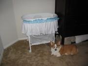 Lockett guarding Kirby on his first night home.