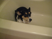 """""""Mom, you better not be giving me a bath!"""""""