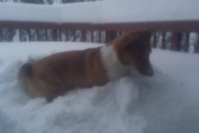 I opened the door and he snuck out! He LOVES the snow!