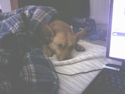 Aw Sniper was feeling sick this day! :(