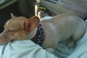 Exhausted after the groomer!