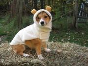 Really...I love my costume!