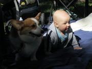 Lockett and Kirby watching the corgis on Corgi Day