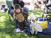 the monkey and his banana