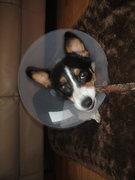 Mia is back from surgery!