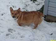 Our first Winter snow with Toby