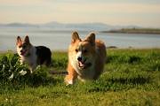 The joy that grass brings...