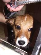 Yoshi's first bath (that we gave him)
