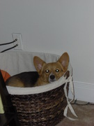 Her toy basket