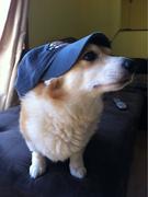 Corgi hat