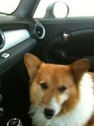 Bert in Mini Cooper