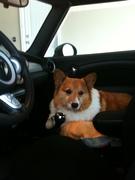 Bert.  He's a great car rider!
