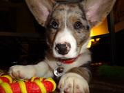 Am I a pretty puppy?